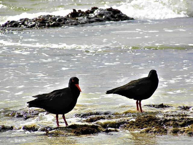 Bushmans – a Birder's paradise